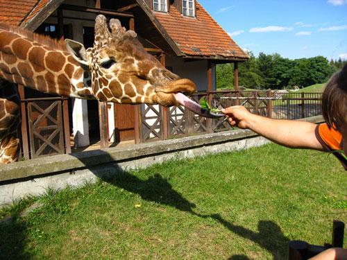 Вроцлавский зоопарк